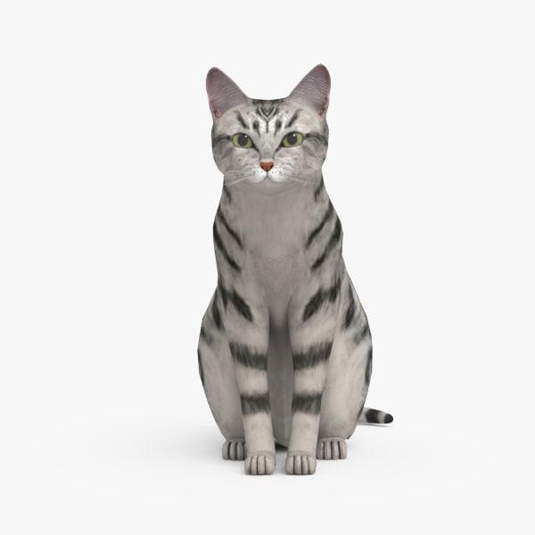 Cat H 3D Models