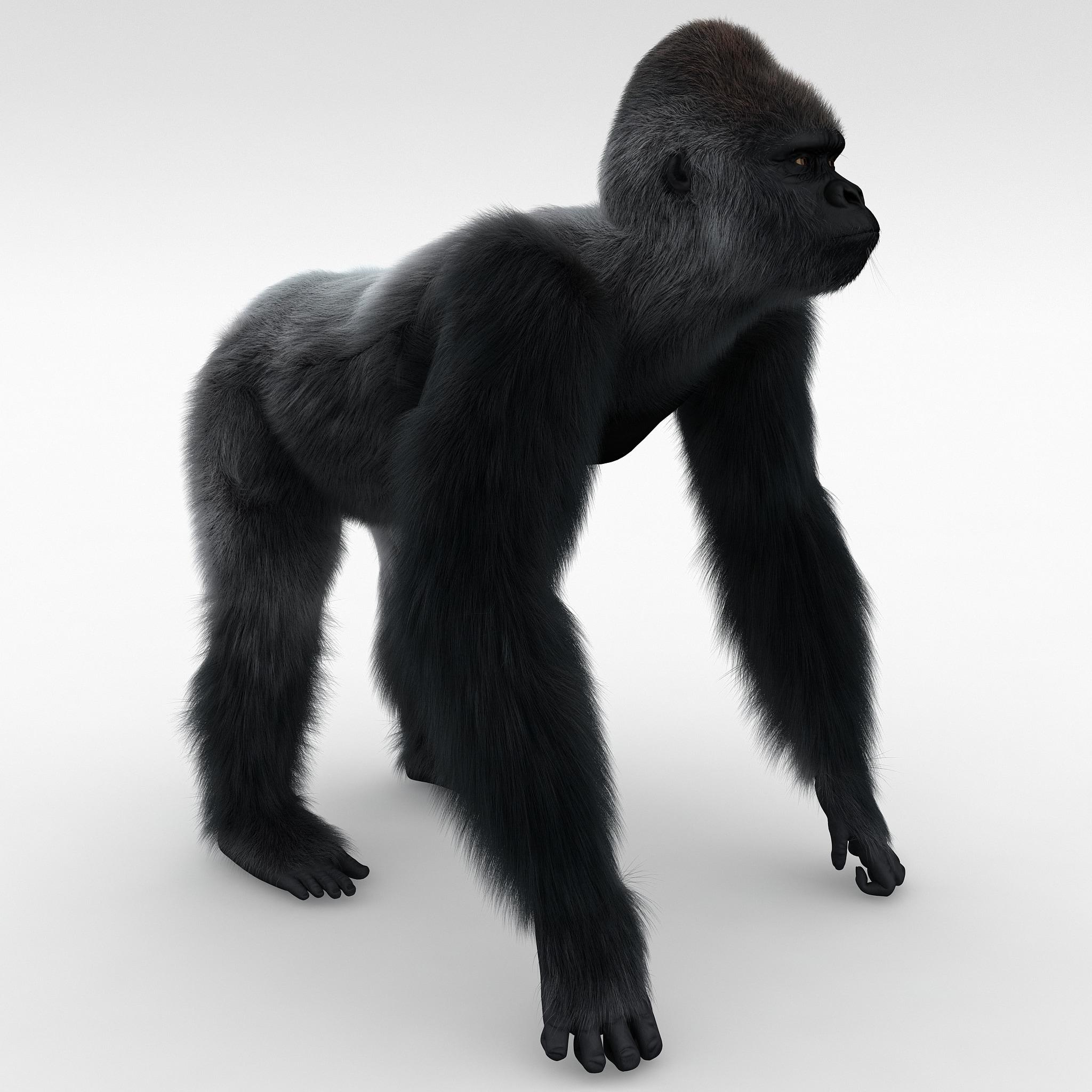 Gorilla Pose 2 Fur