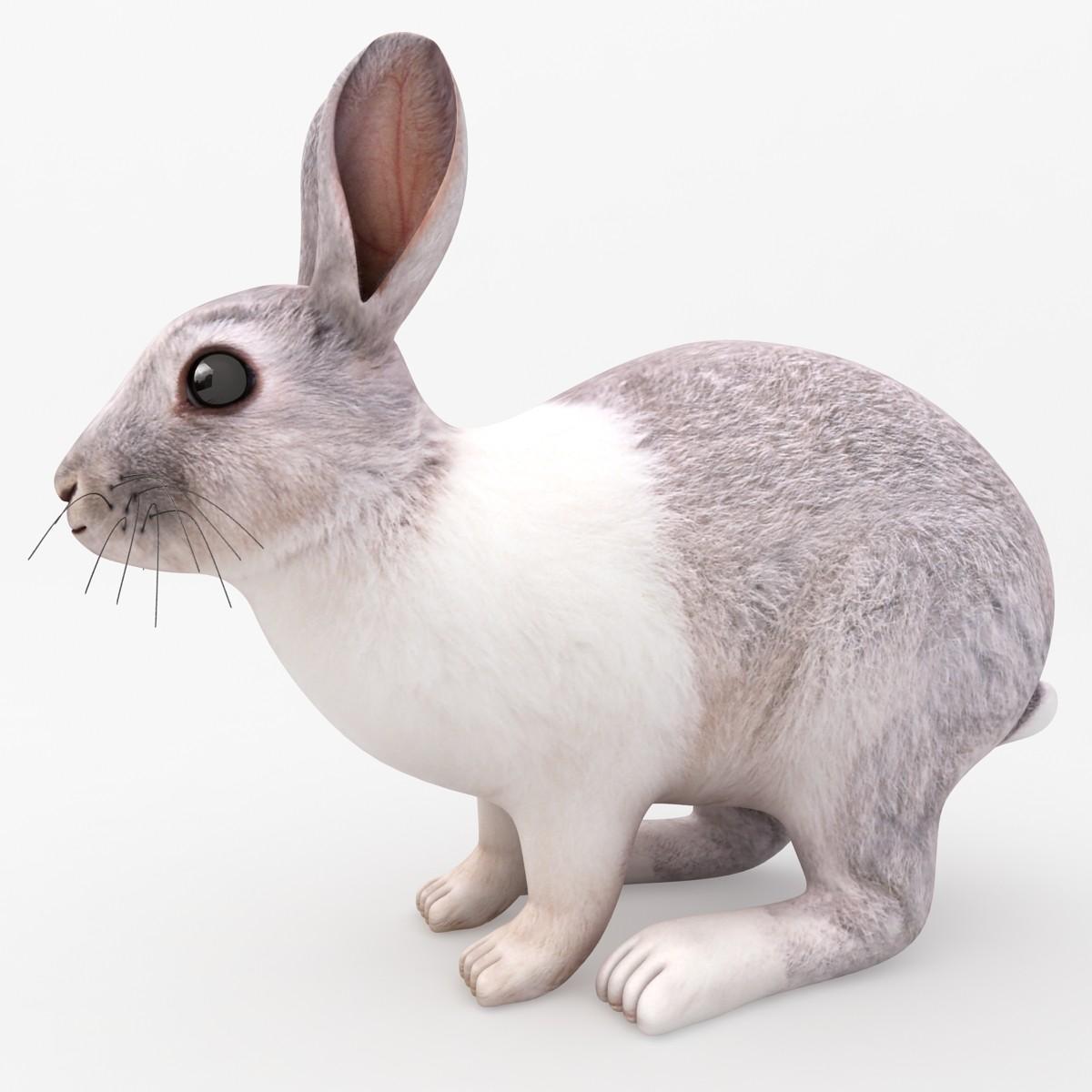 Rabbit_Rr_01.jpg