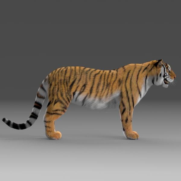 Tiger (Fur) 3D Models