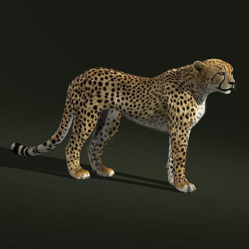 Cheetah (2) (FUR)