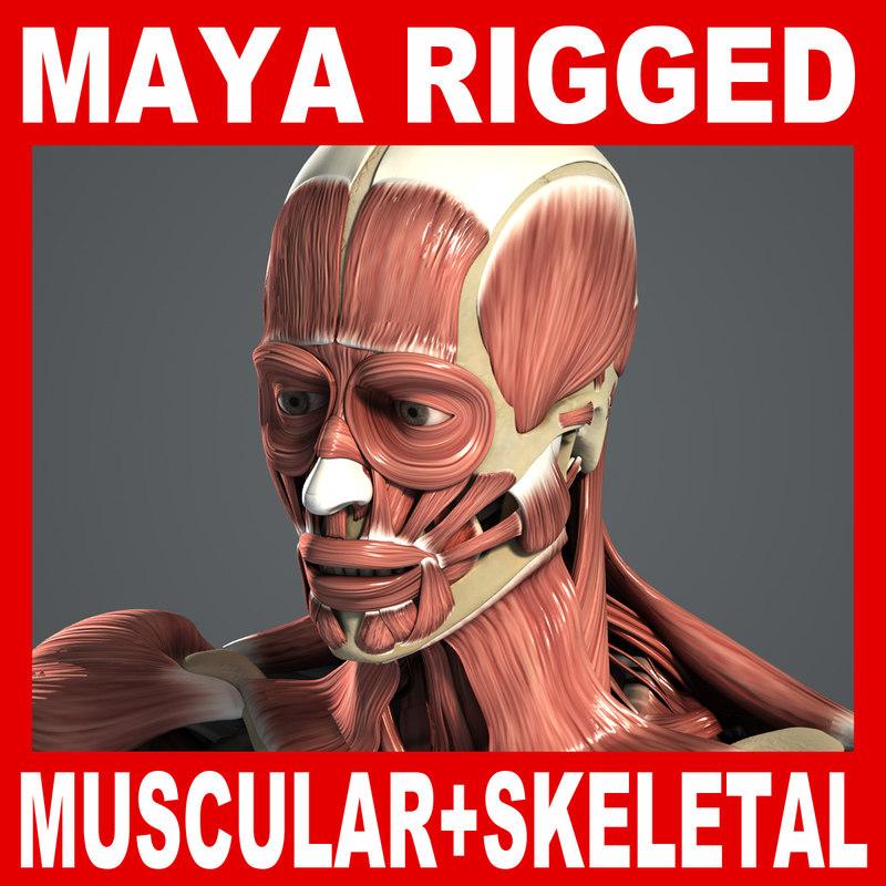 MAYA RIGGED Muscular & Skeletal Systems Anatomy 3D Model