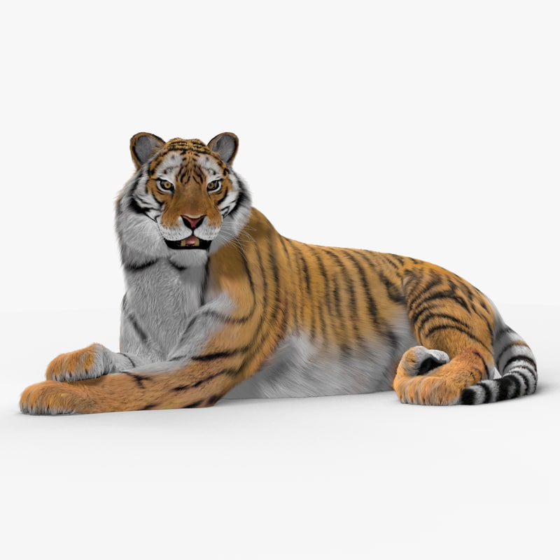 Tiger (Animated) (Fur)