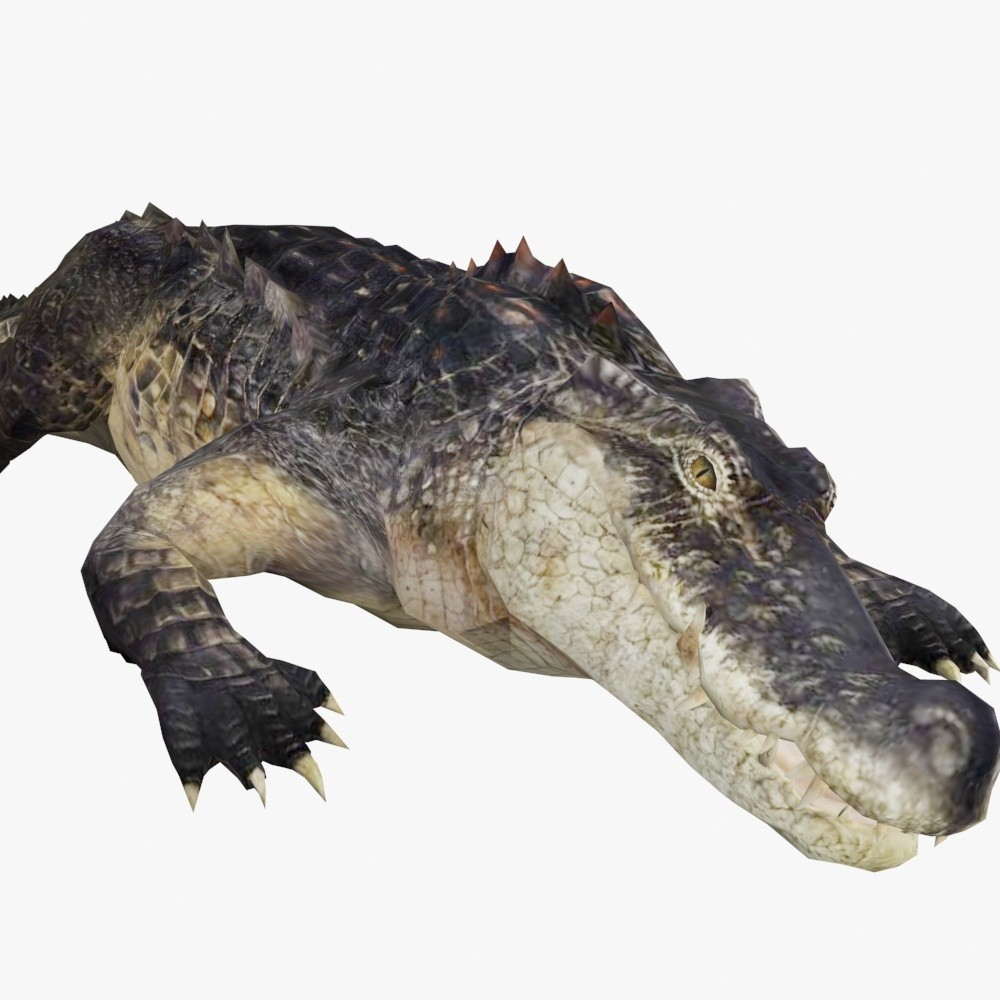 AlligatorShowPic.jpg