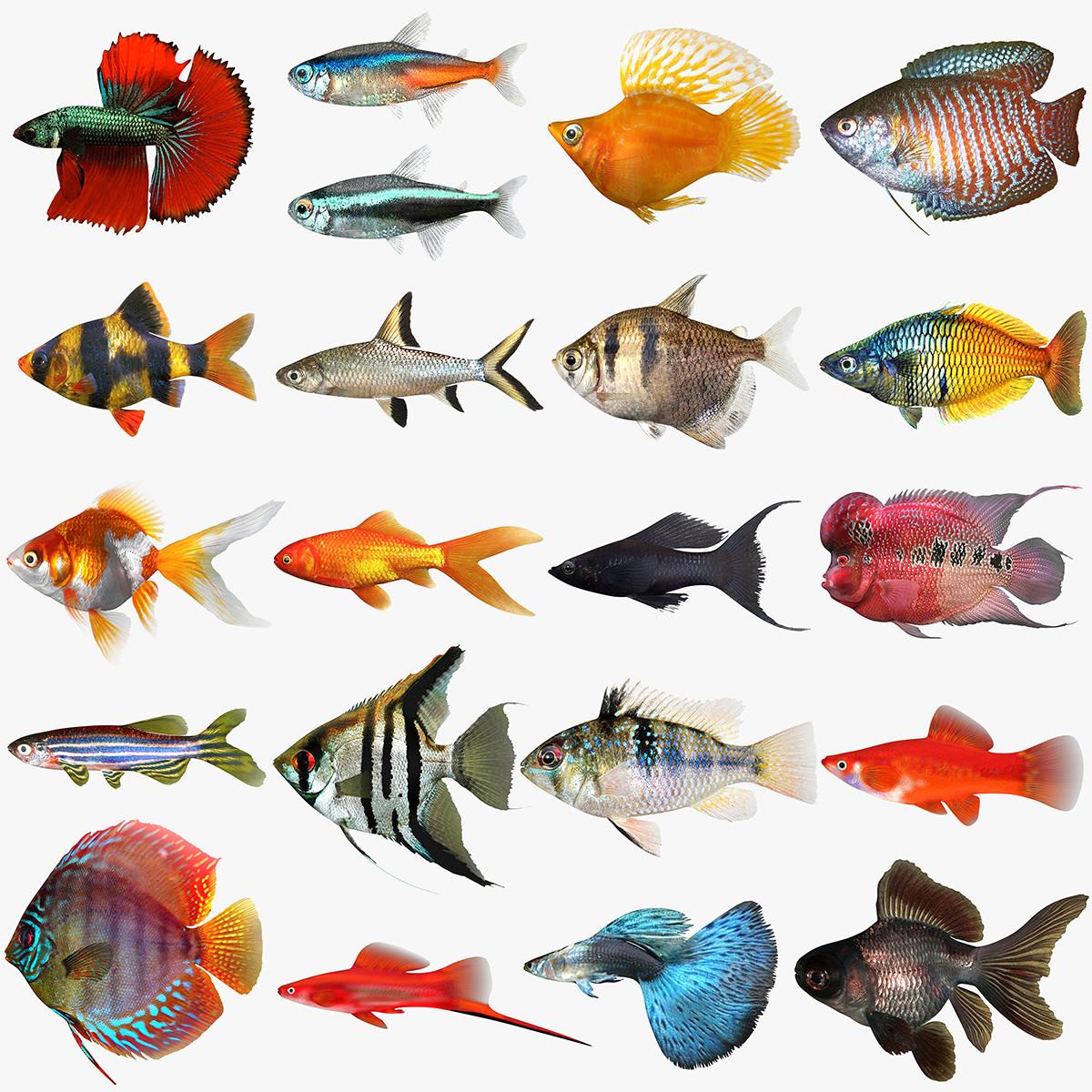 Mega_Freshwater-Fish_TEST.jpg