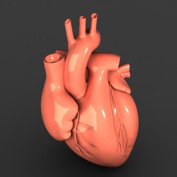 Heart_detail_02.jpg