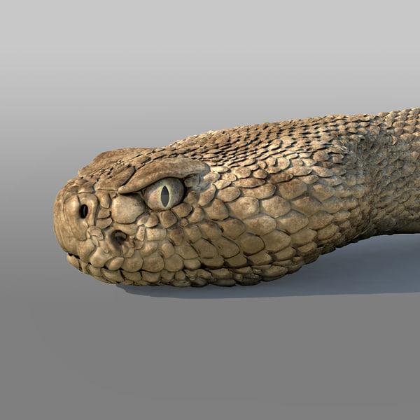 Rattlesnake 3D Models