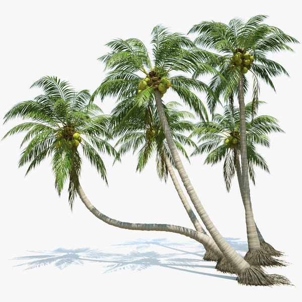 Coconut Palms Set 3D Models