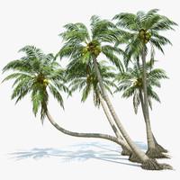 palm tree 3d models