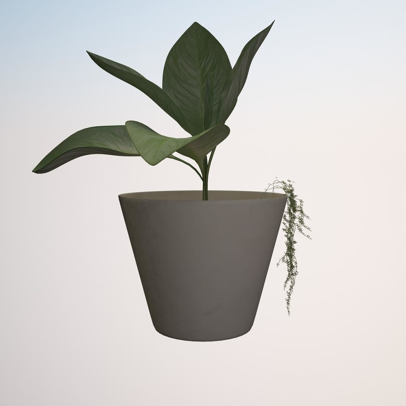plant 1a