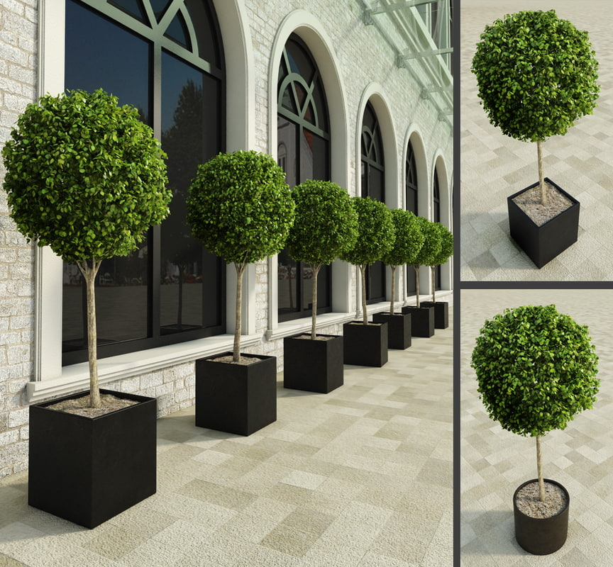 3d plants restaurants hotels for Outdoor bushes and plants