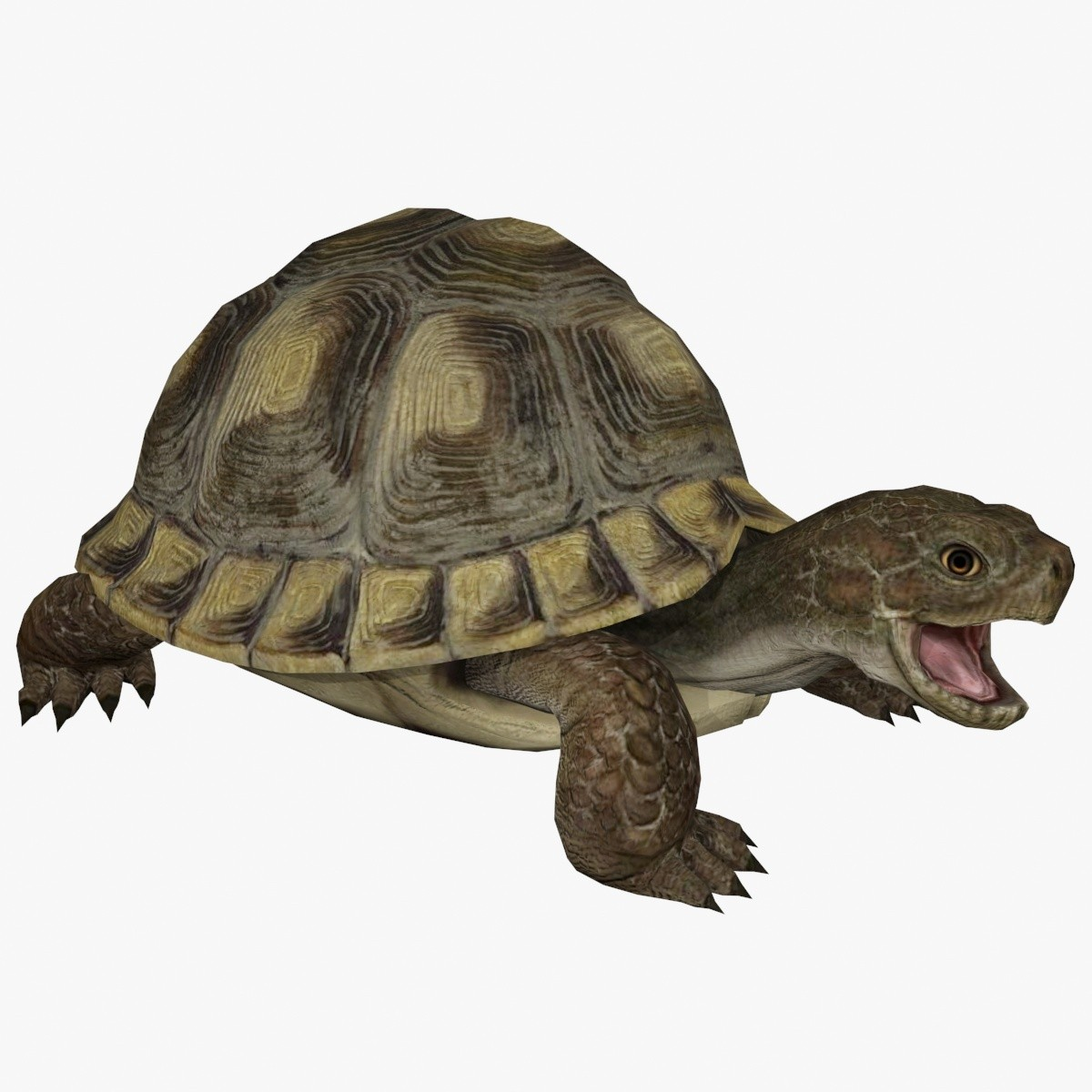TurtleShowPic1.jpg