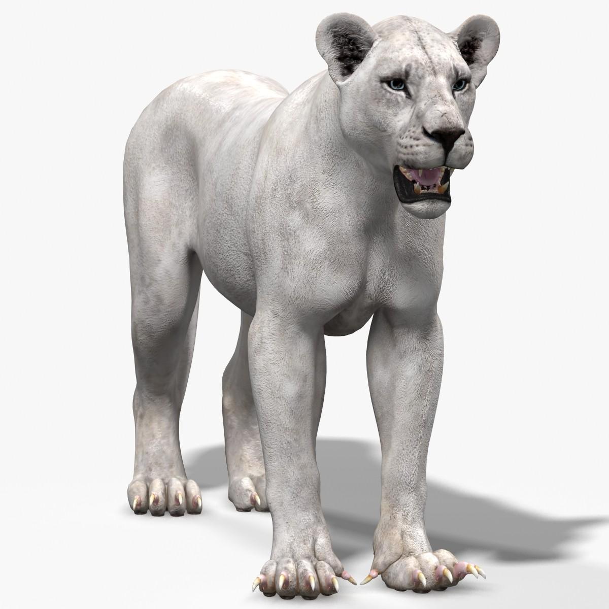 Lioness-.jpg