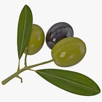 Olive 3D models