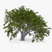 tree 3d models