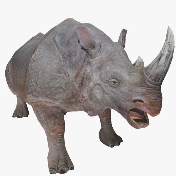 RhinoShowPic.jpg