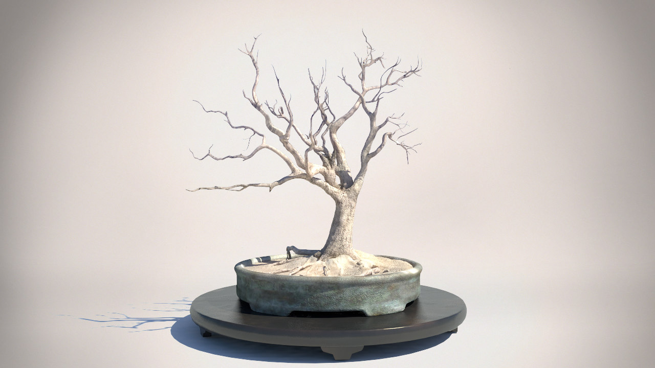 tree_turbosquid_turntable_001.jpg