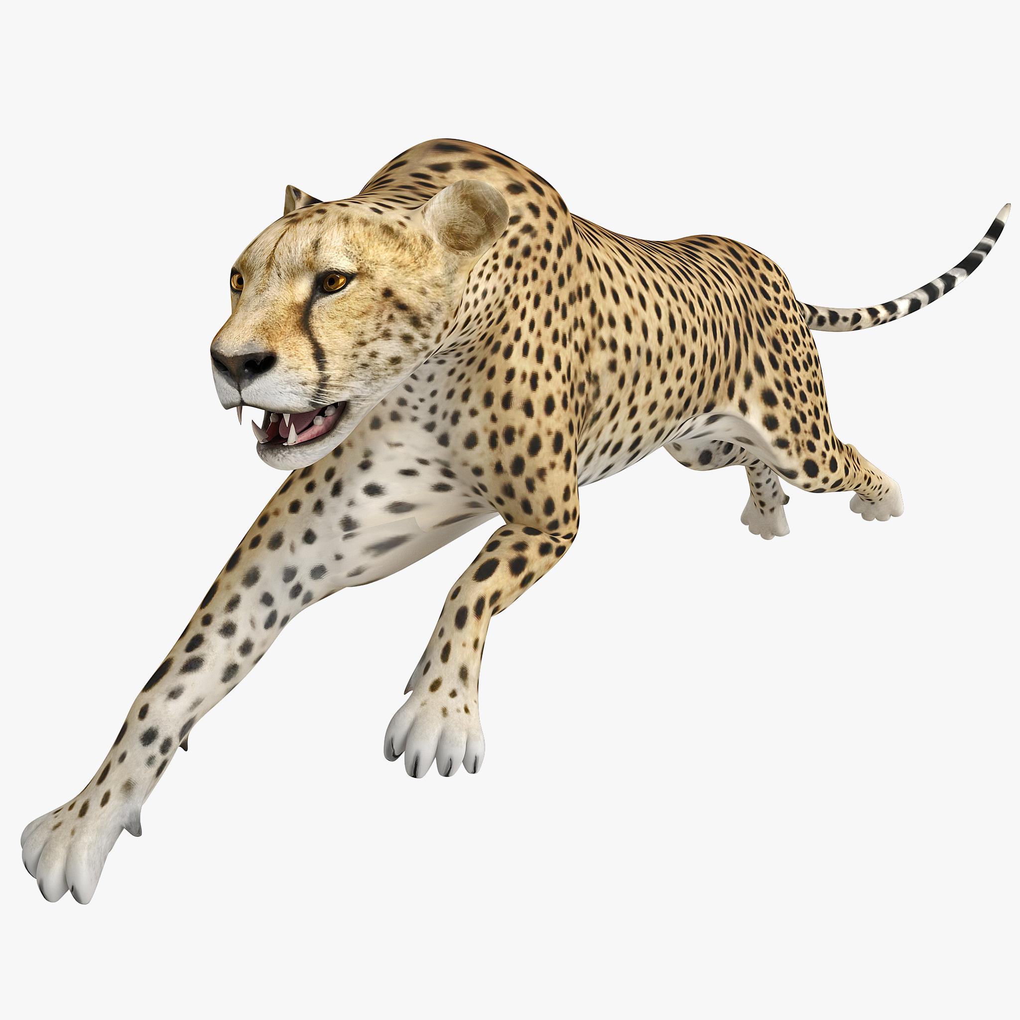 Cheetah 2 Pose 2_1.jpg