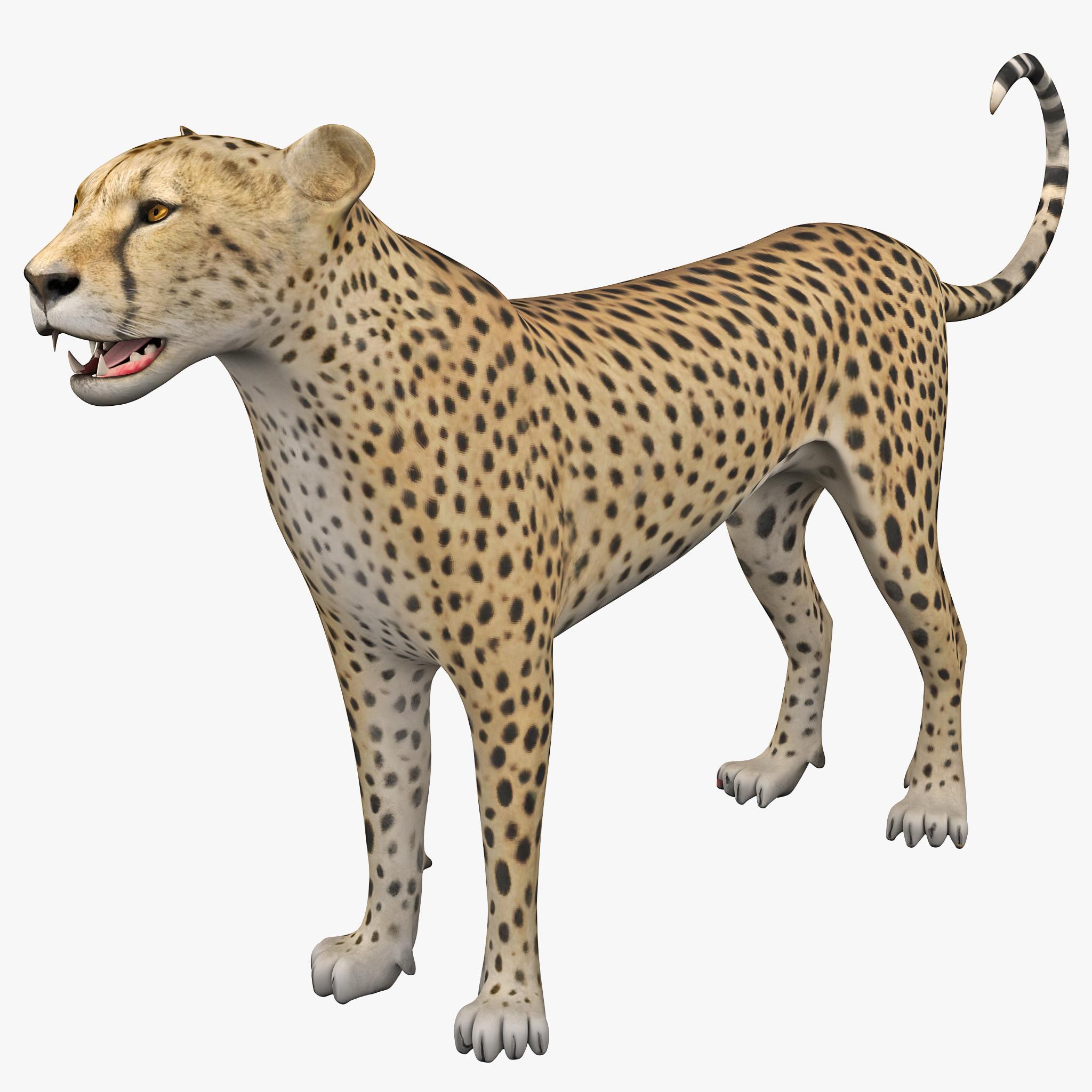 Cheetah 2 Rigged_1.jpg