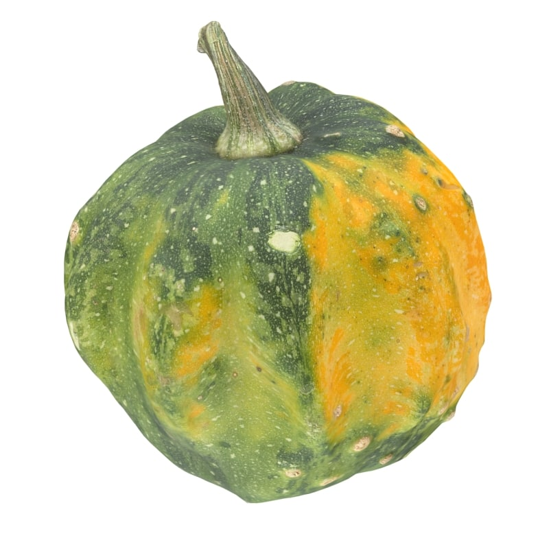 Pumpkin Scan 6