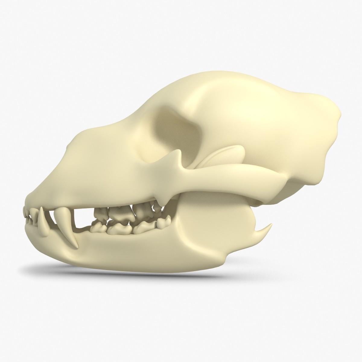 BearSkull-2chk247.jpg
