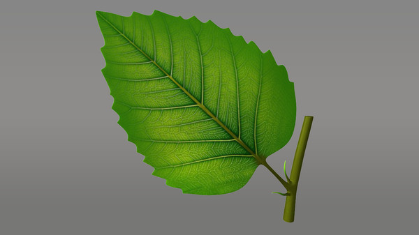 Parts of a leaf 3D Models