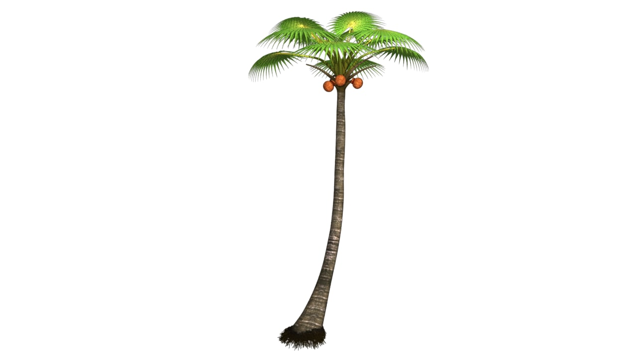 Palm tree_01.png