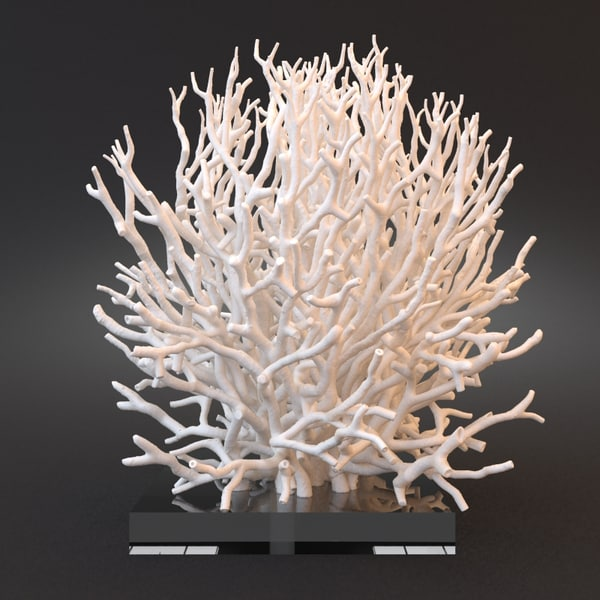 White Coral Specimen on Lucite Stand 3D Models
