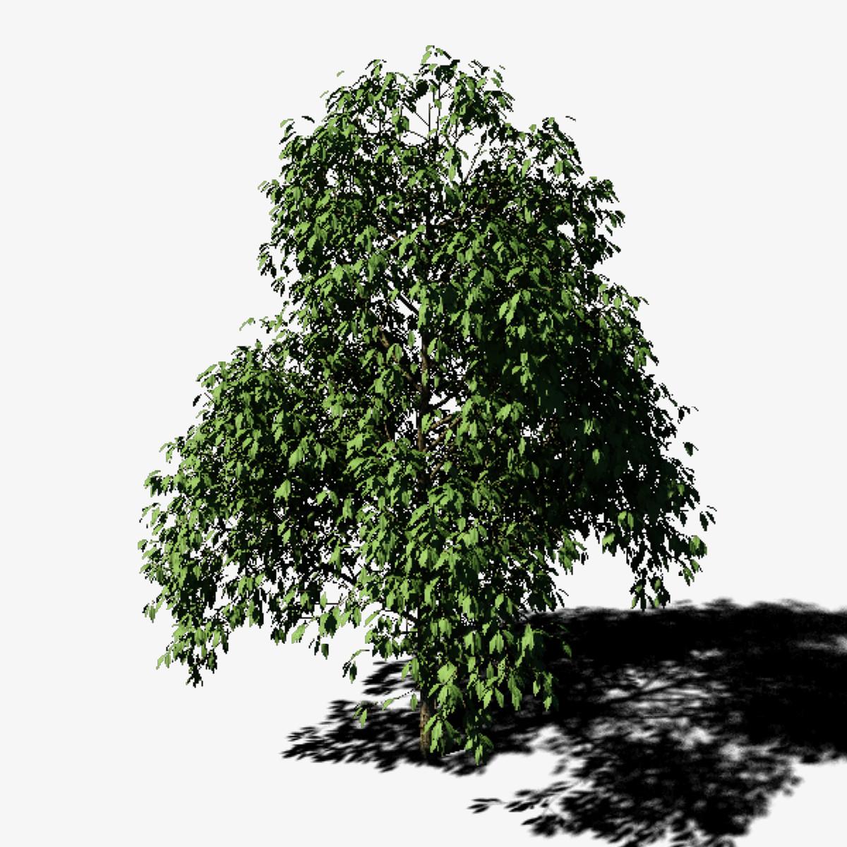 Tree_0001.jpg