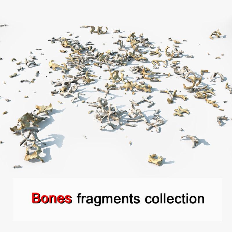 Animal Creature Bone Fragments