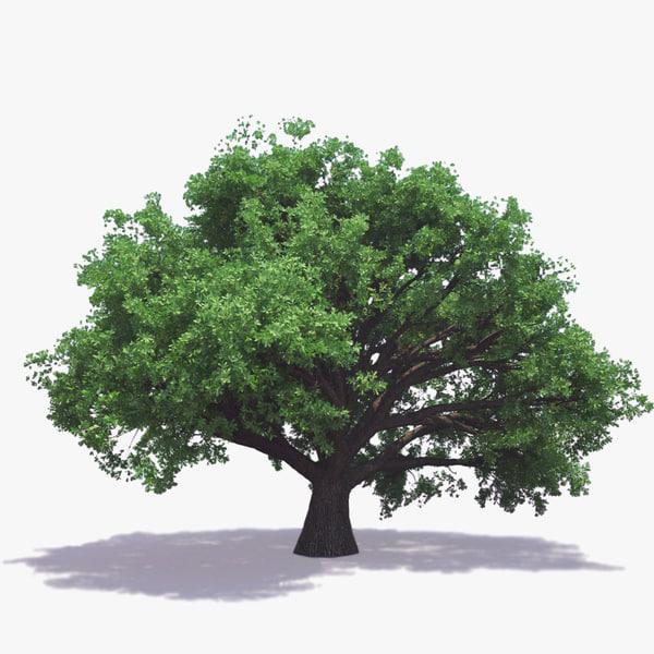 English Oak (For Any Season) 3D Models