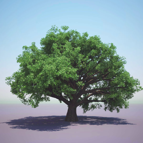 English Oak (For Any Season) 3D Models