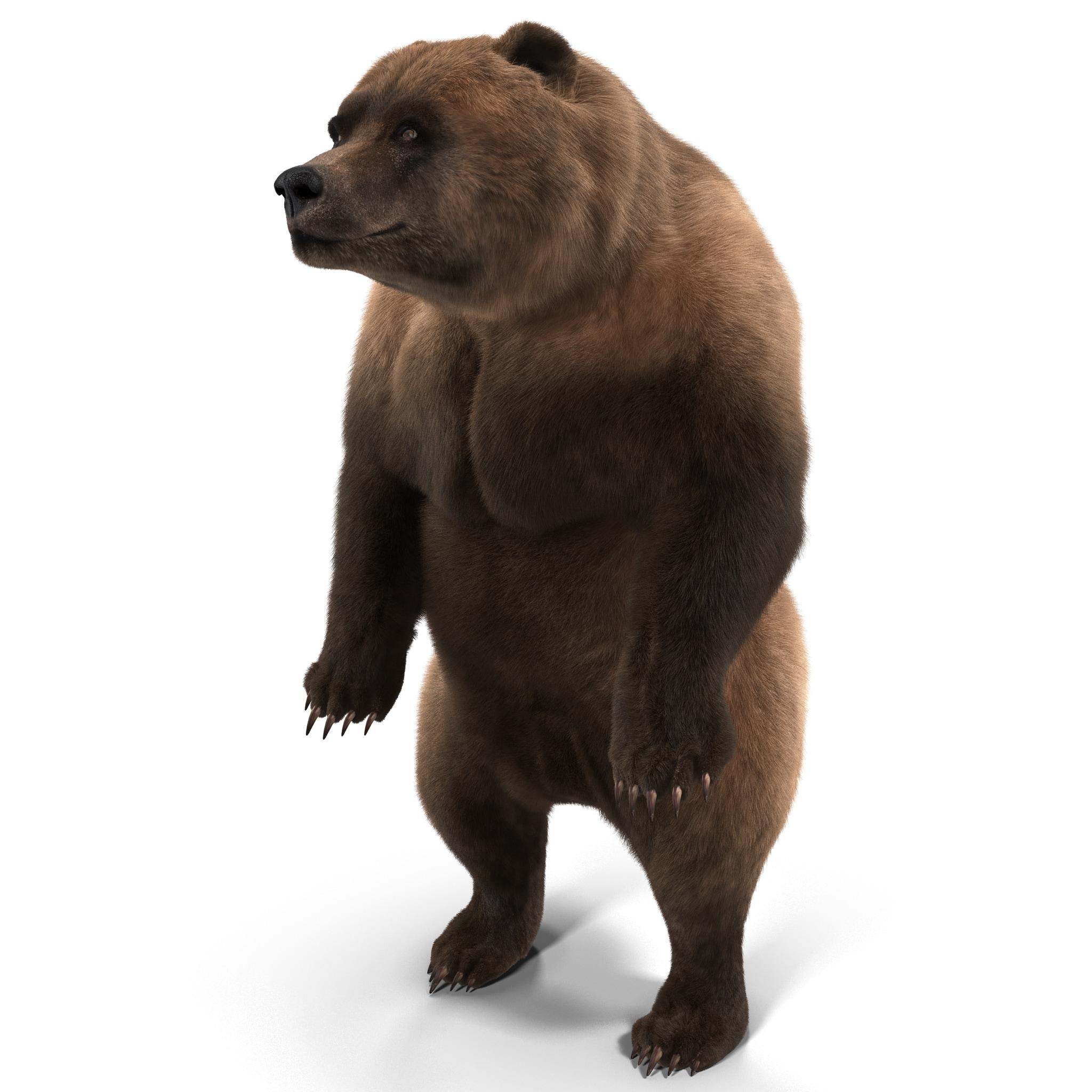 Grizzly Bear Pose 3 Fur