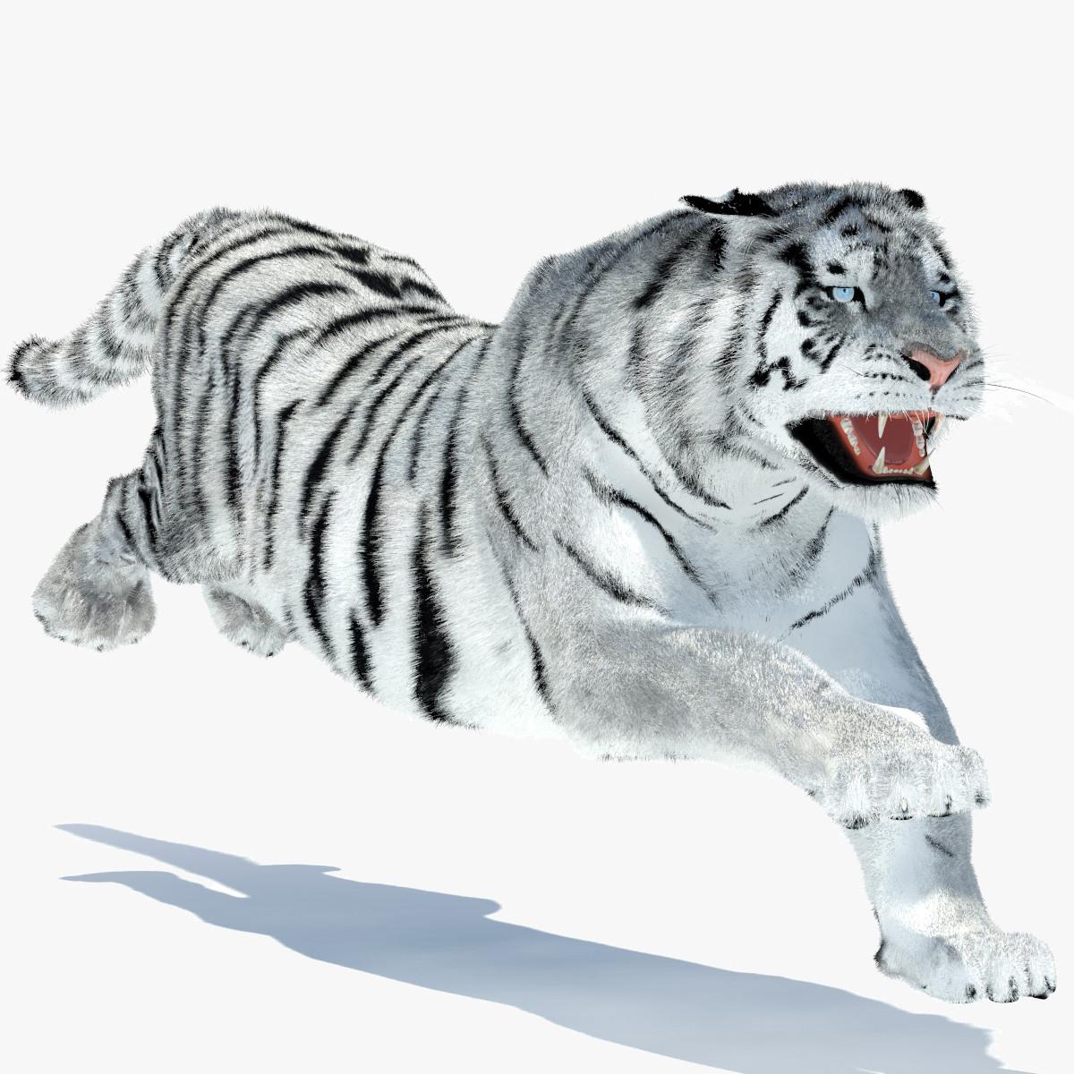 Tiger-White-00.jpg