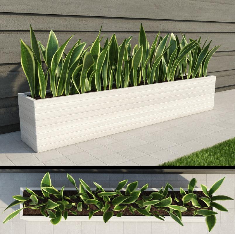 Indoor_outdoor_plant.jpg