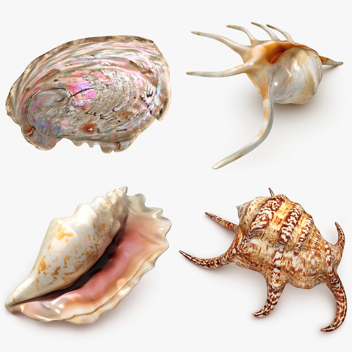 Animal Shell Set