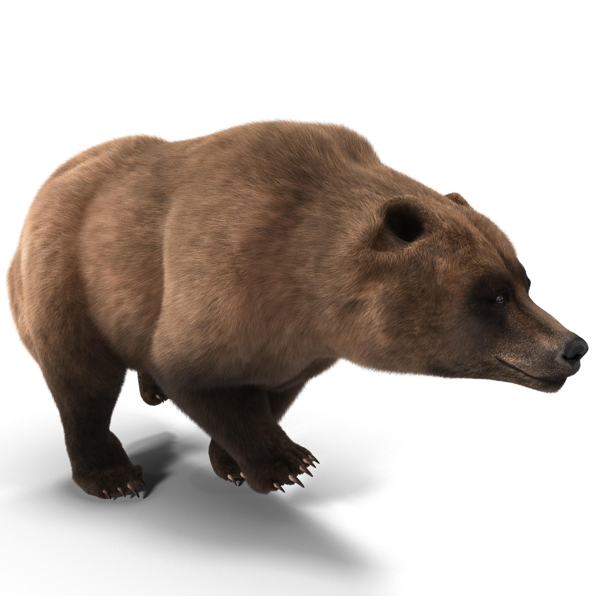 Grizzly Bear Pose 4 Fur