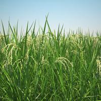 Grain 3D models