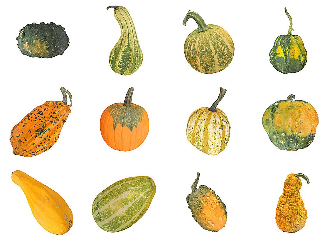 Pumpkin Pack 12