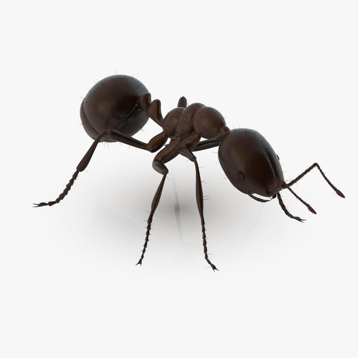 Ant_00001.jpg