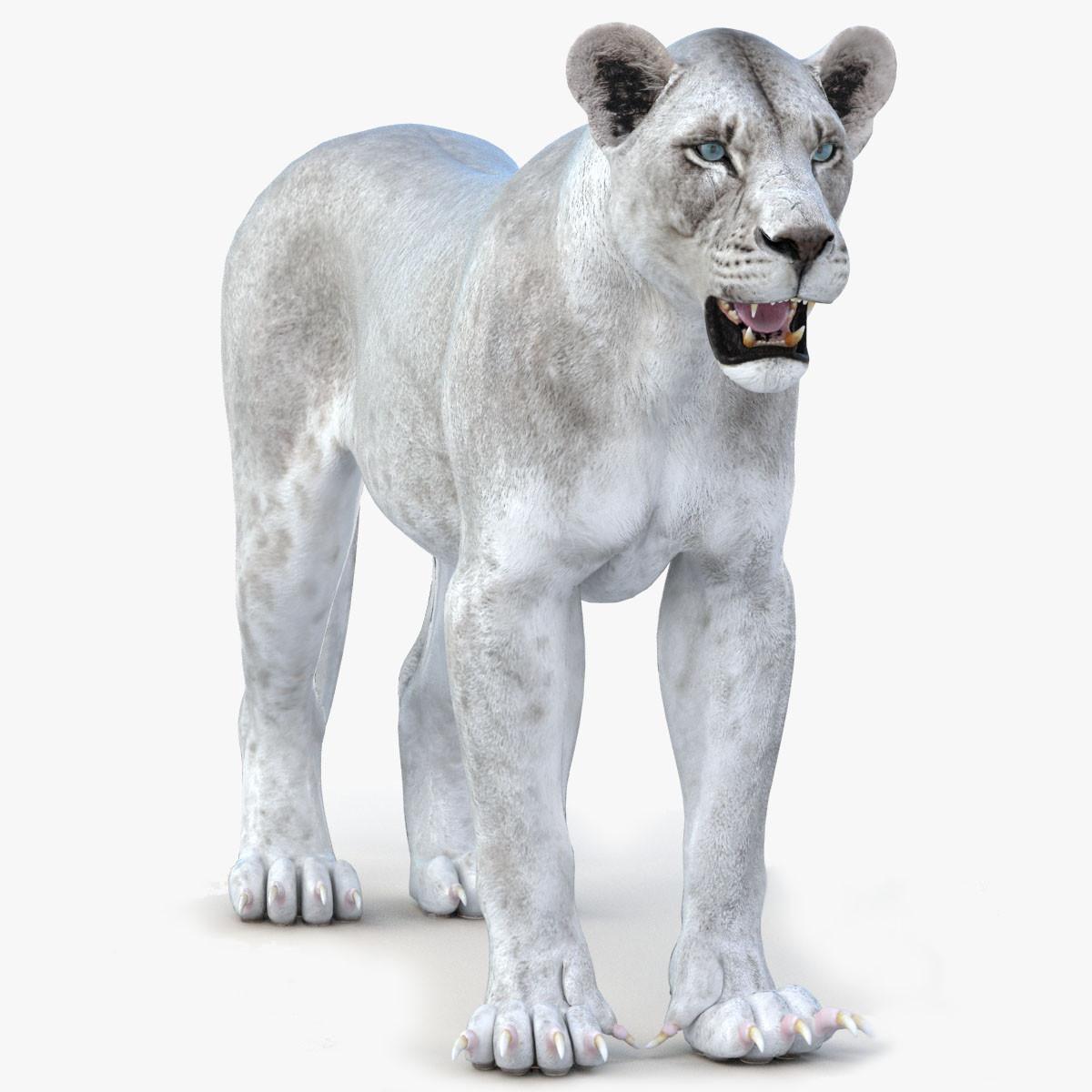 Lioness-Vray.jpg