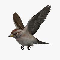 sparrow 3D models