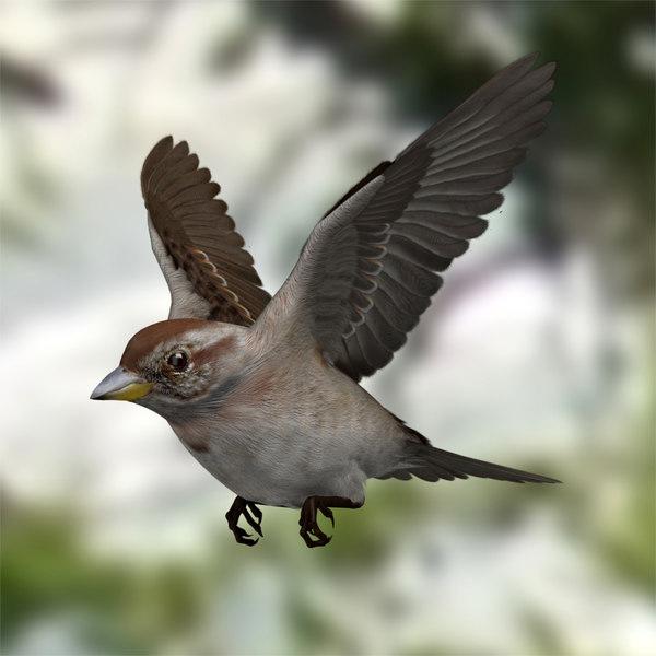 Spizella Arborea 'American Tree Sparrow' 3D Models