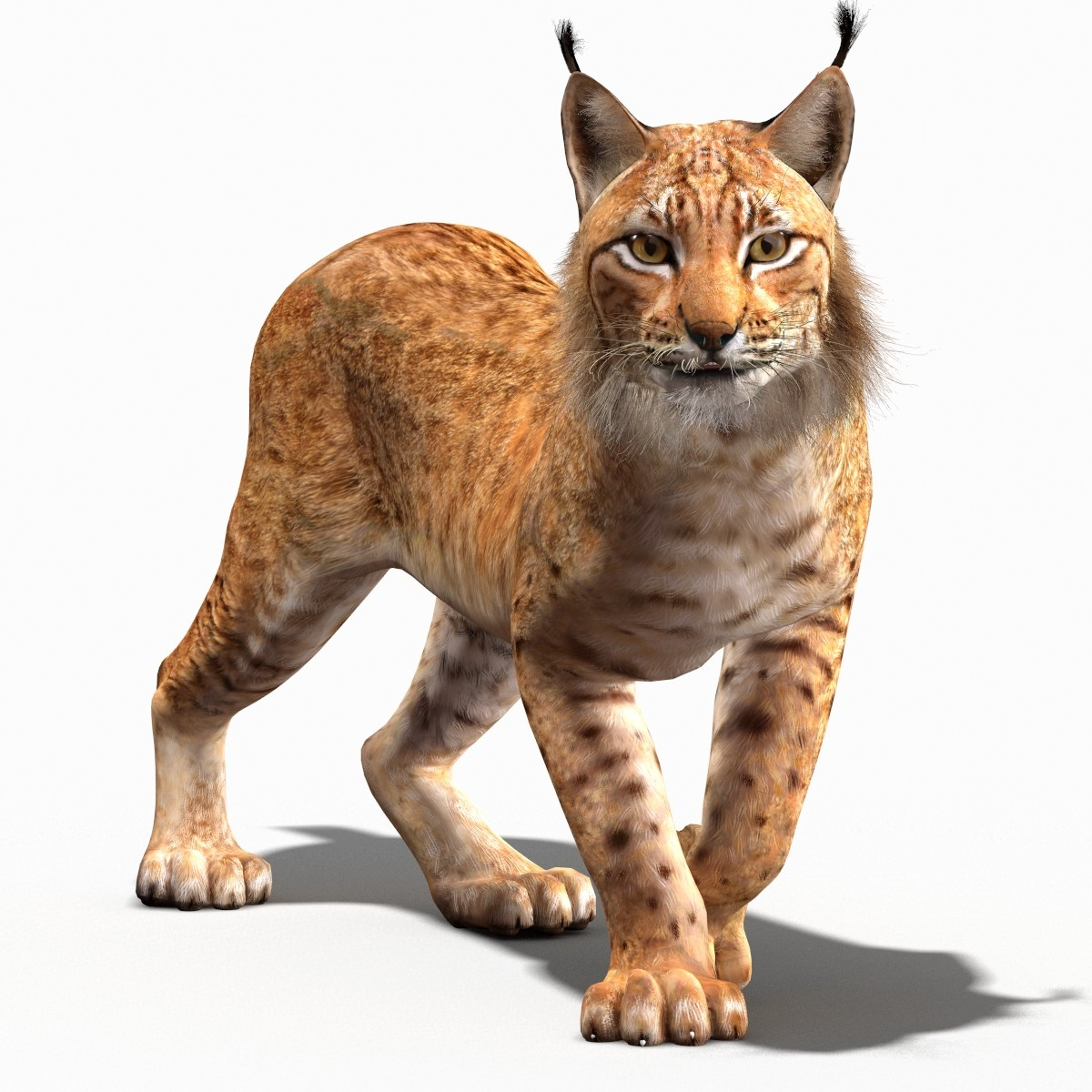 Eurasian_Lynx-02.jpg