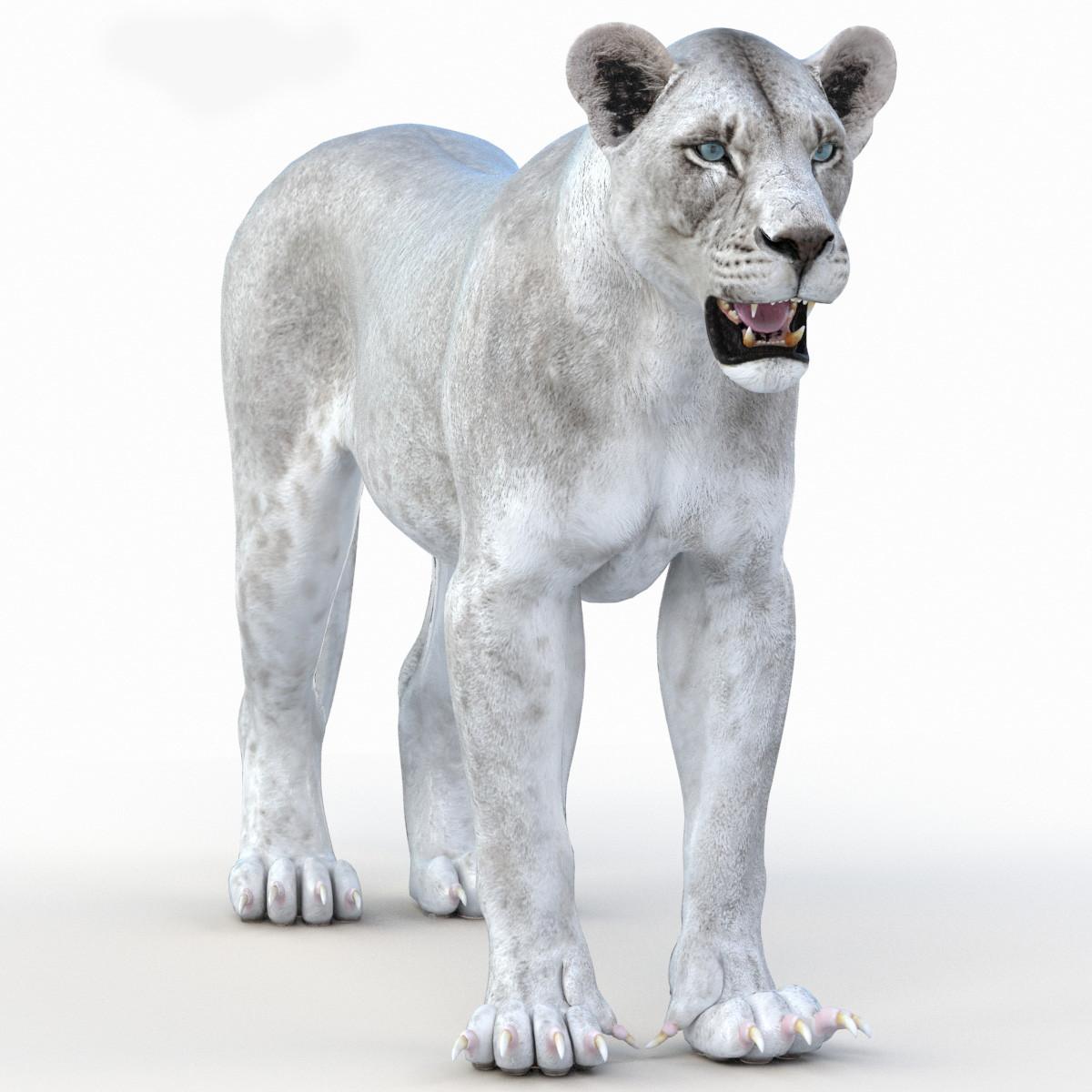 Lioness-Vray-00.jpg