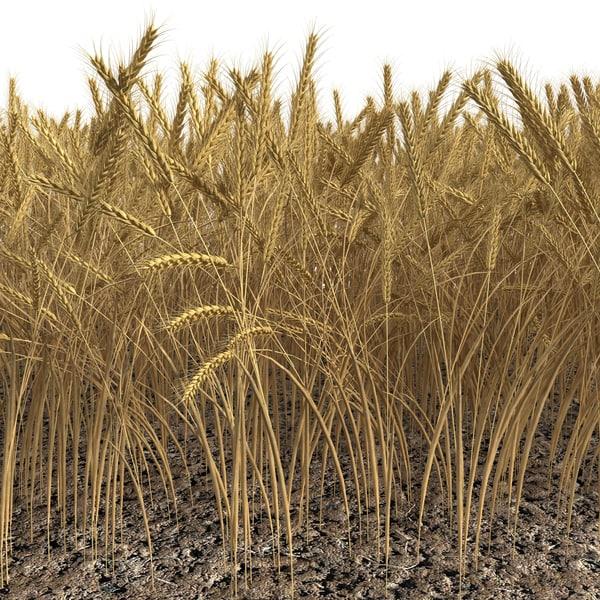 Wheat Field 3D Models