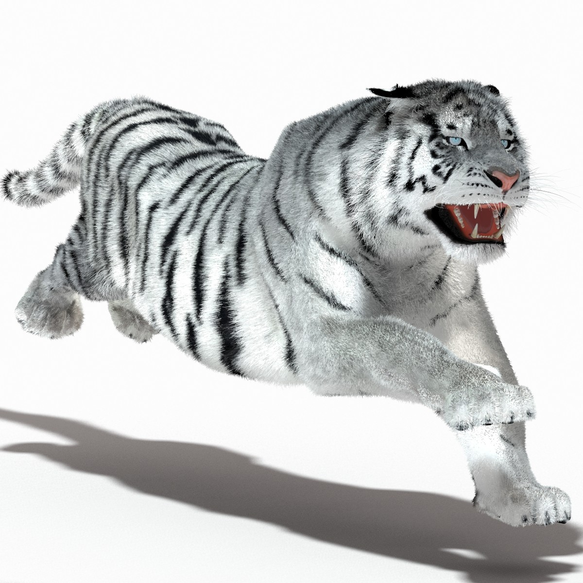 Tiger-White-01.jpg
