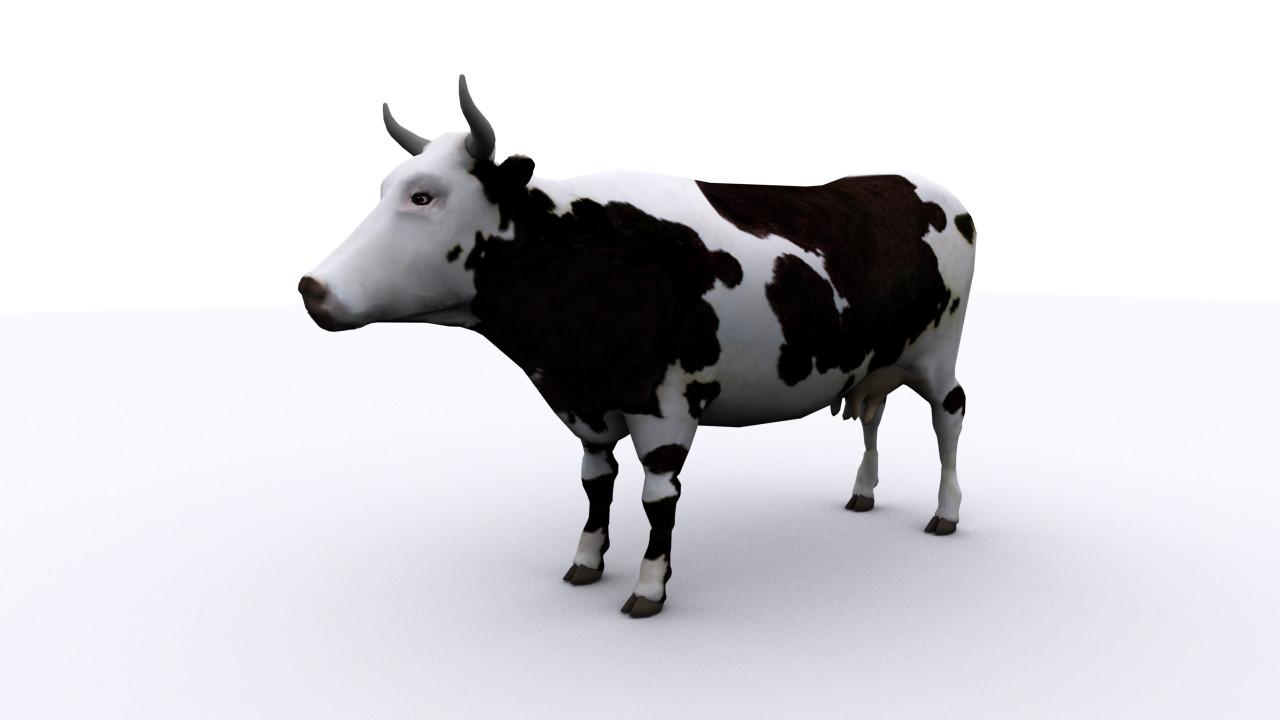 cow image 01.jpg