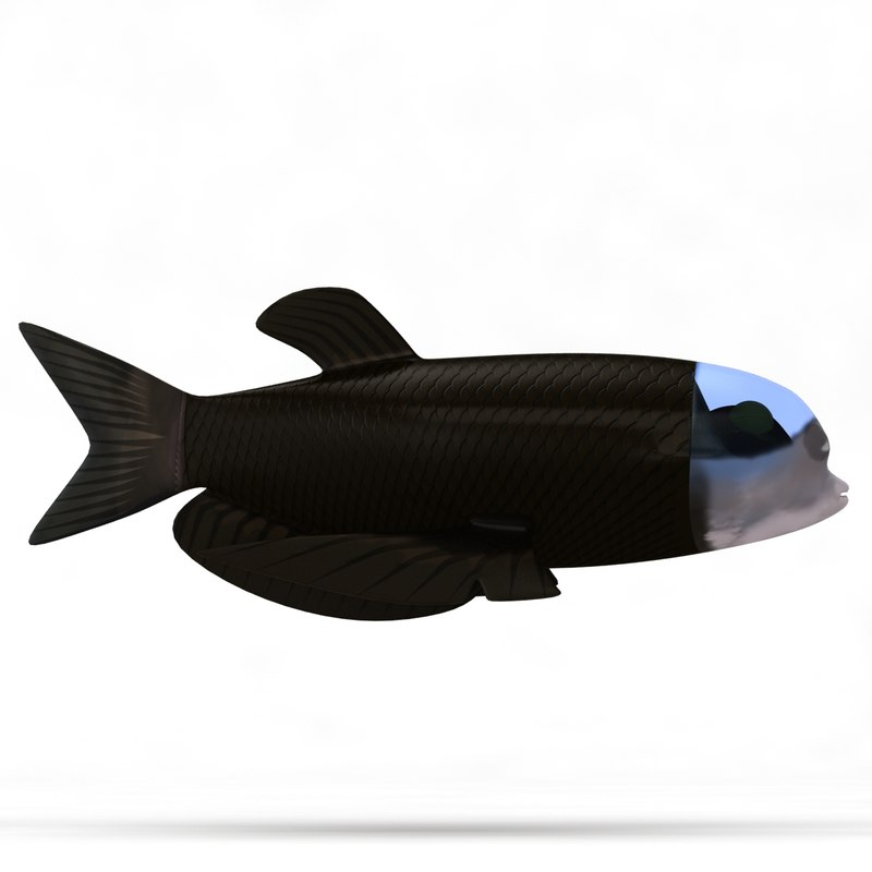 barreleye fish_Camera001_Thumbnail_30.JPG