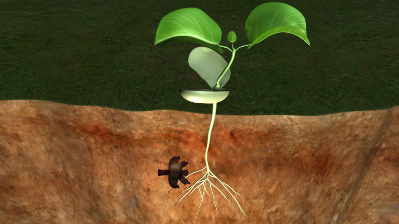 Seed Germination_02.png
